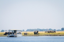 Elephants are quite relaxed in the presence of boats