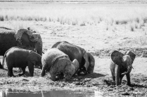 Finally after watching an elephant herd having their mud bath we bid Chobe farewell with heavy hearts...