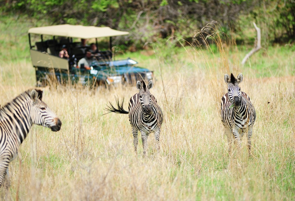 S&L game drive D